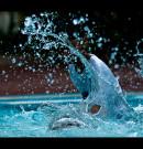 Jak prawidłowo dbać o wodę w basenie?